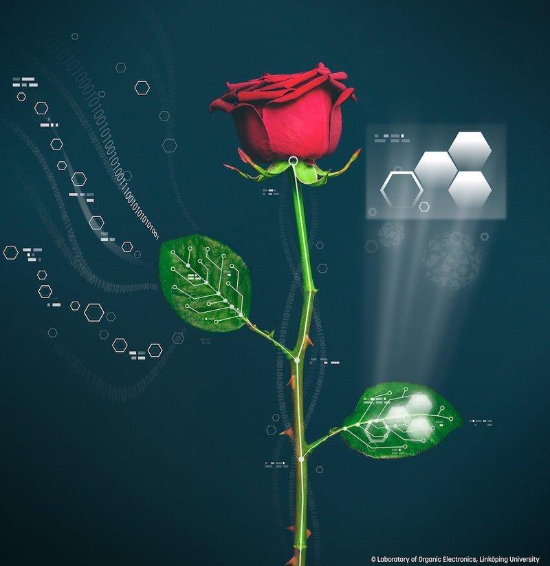 0320000008253210-photo-rose-bionique.jpg