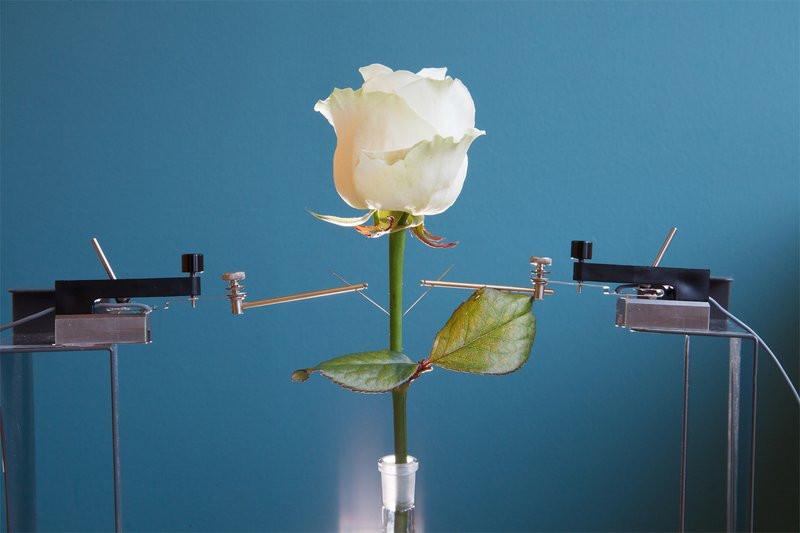0320000008253208-photo-rose-bionique.jpg