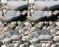 00C8000000557011-photo-bigle-3d.jpg