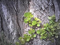 00d2000000053567-photo-spypen-luxo-branches-d-arbre.jpg
