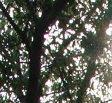 0000009604614392-photo-nikon-1-j1-aberrations-10-mm-pancake-extrait.jpg