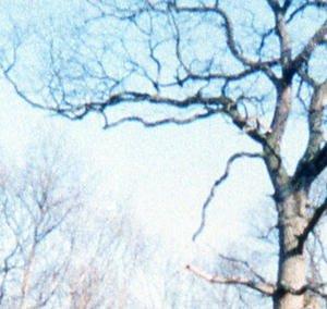 012c000003008898-photo-epson-perfection-v600-photo-diapo3-crop.jpg