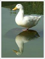 0096000000148796-photo-compo-sujet.jpg