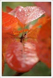 00b4000000426666-photo-carte-voeux-recadrage.jpg