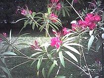 00d2000000053566-photo-spypen-luxo-fleurs.jpg