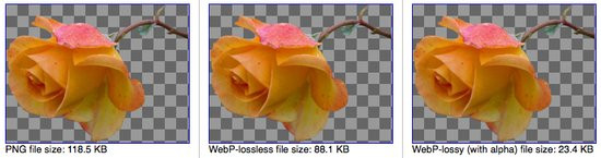 0226000004762786-photo-webp-lossless-et-transparence.jpg