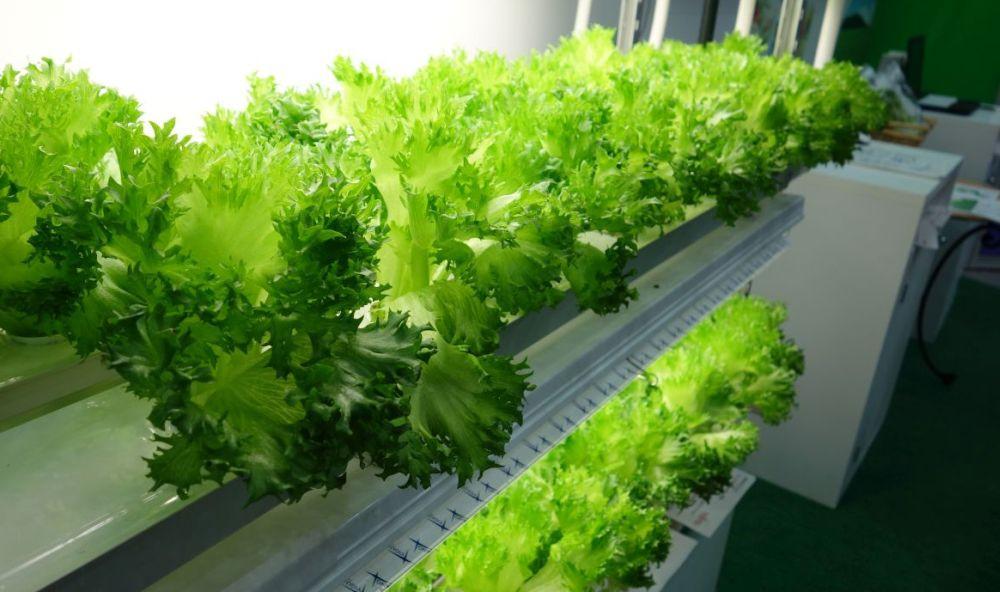 07670053-photo-salade-toshiba-fujitsu-ceatec.jpg