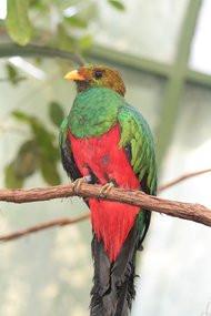 00BE000005117688-photo-ubuntu-12-10-quantal-quetzal.jpg