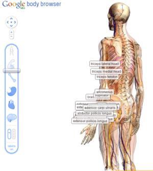 012C000003848990-photo-google-body-browser.jpg