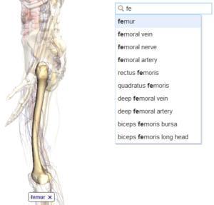 012C000003848992-photo-google-body-browser.jpg
