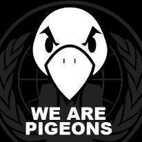 05455187-photo-pigeons.jpg