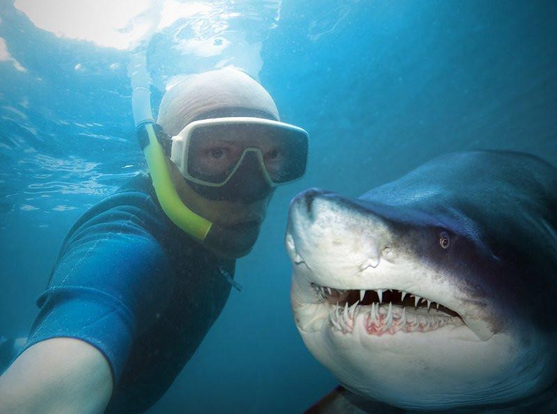 0320000008177632-photo-selfie-requin.jpg