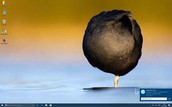 0159000008510002-photo-windows-10-anniversary-update-notifications-2.jpg