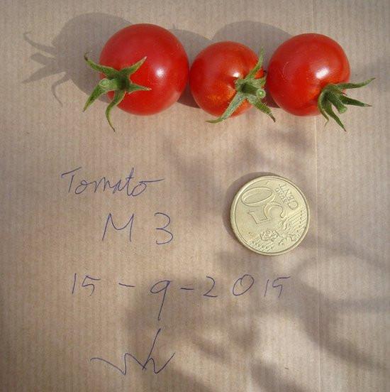 0226000008376816-photo-tomates-martiennes.jpg