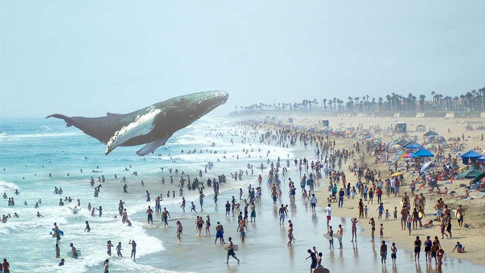 03E8000008217808-photo-magic-leap.jpg