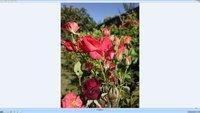 00c8000006692362-photo-asuspq321-photo-nokia808-100-pour-100-2.jpg