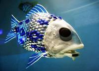 00C8000001988634-photo-roboto-fish.jpg