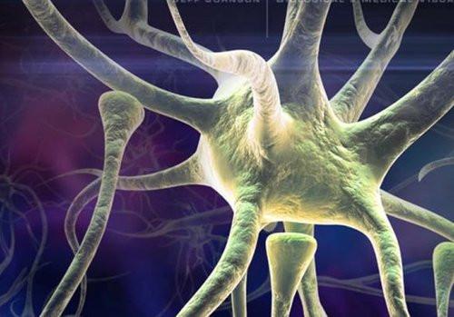 01F4000001786014-photo-neurone.jpg