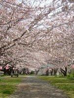 000000C801988834-photo-live-japon-fleurs-et-robots-la-une.jpg