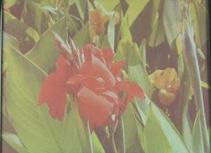 012C000003180192-photo-fujitsu-ancien.jpg