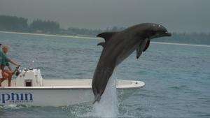 012c000003984158-photo-dolphin.jpg
