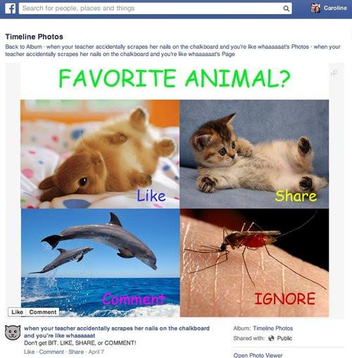 01F4000007296680-photo-spam-facebook.jpg