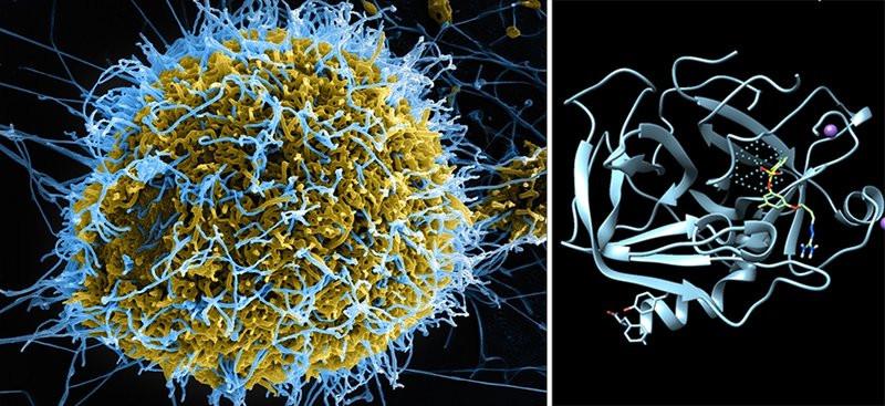 0320000007731127-photo-ebola-chematria.jpg
