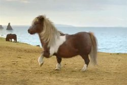 00fa000005870050-photo-un-poney-danseur.jpg