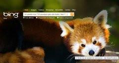 00F0000002675292-photo-bing-panda-roux-firefox.jpg