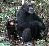00C8000004482096-photo-chimpanz-s.jpg