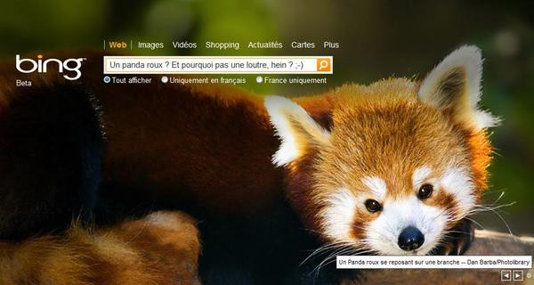 0258000002675292-photo-bing-panda-roux-firefox.jpg