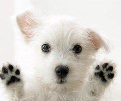 Voici un collier pour chien... plein de puces