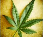 Microsoft travaillera avec l'industrie du cannabis légalisé