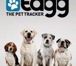 Tagg : un traqueur GPS pour animal de compagnie