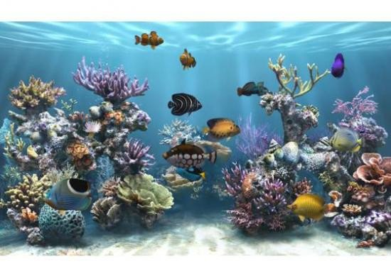 Ecran De Veille Anime Aquarium | Allcanwear.org