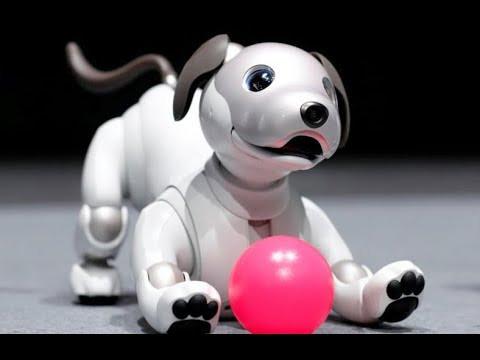 ces 2018 on a retrouv aibo le chien robotique de sony. Black Bedroom Furniture Sets. Home Design Ideas