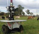Des robots pour surveiller les vaches en Australie