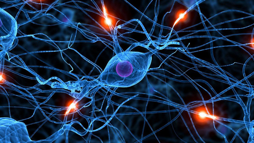 Cerveau neurone