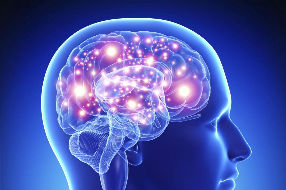 H Getty Images cerveau retaillee