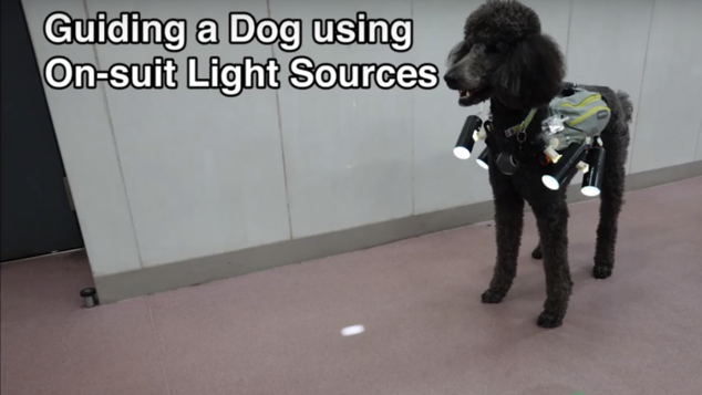veste guide chien