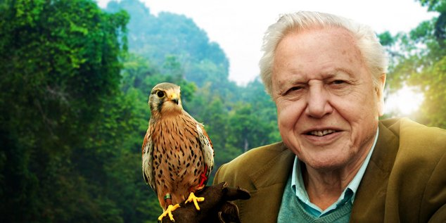 David Attenborough Netflix