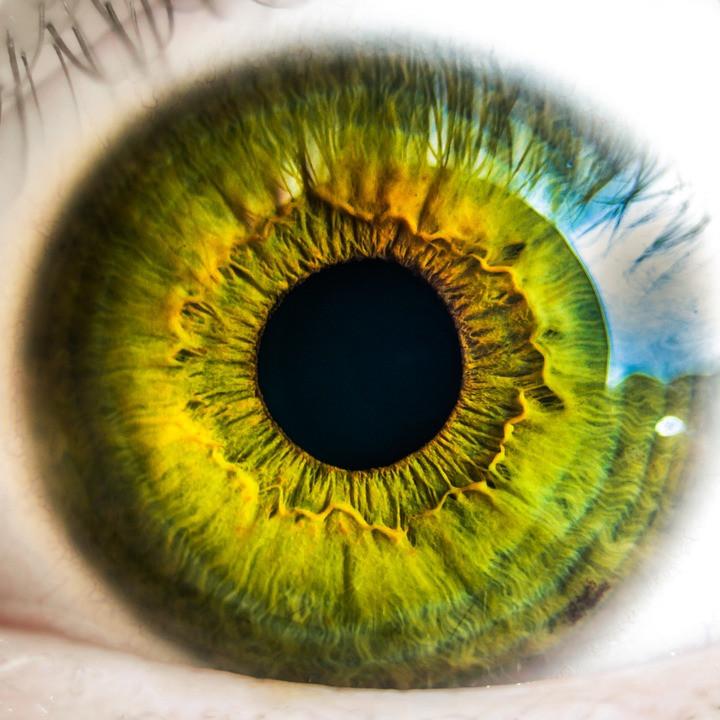 Oeil rétine
