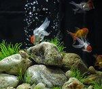 Reef-Pi : un système de gestion d'aquarium basé sur Raspberry Pi