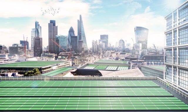 Feuille bio-solaire
