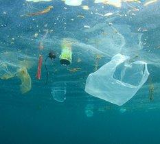 Les bioplastiques sont-ils la solution environnementale tant attendue ?