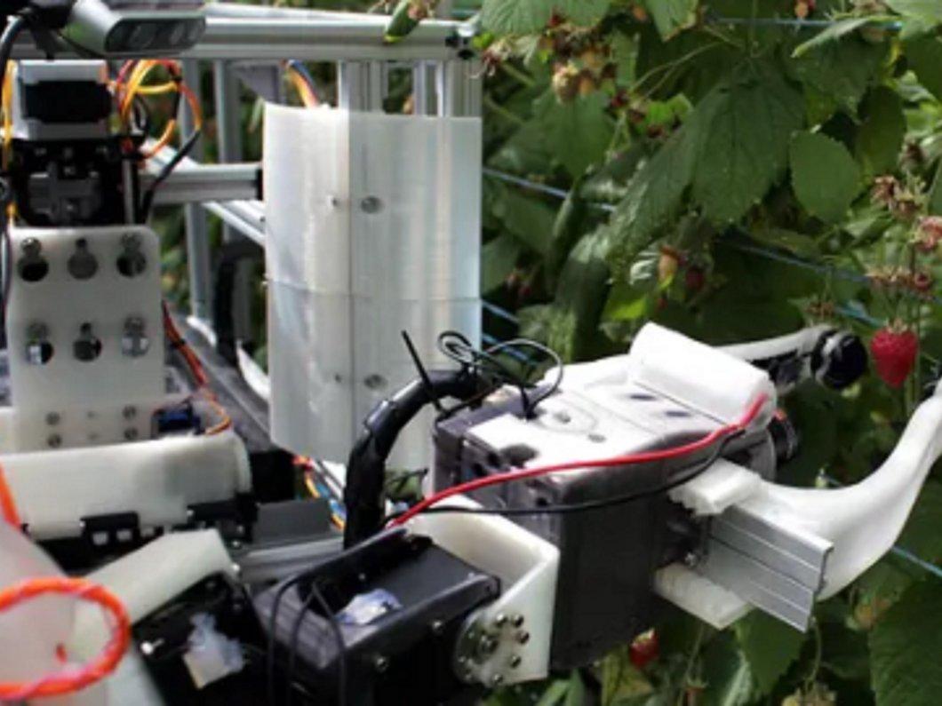 Un robot est capable de cueillir 25 000 framboises par jour, son nom : Robocrop