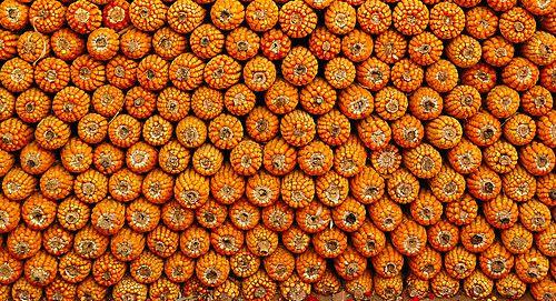 0.000466_ladybug___ladybug_0.88748044.jpg