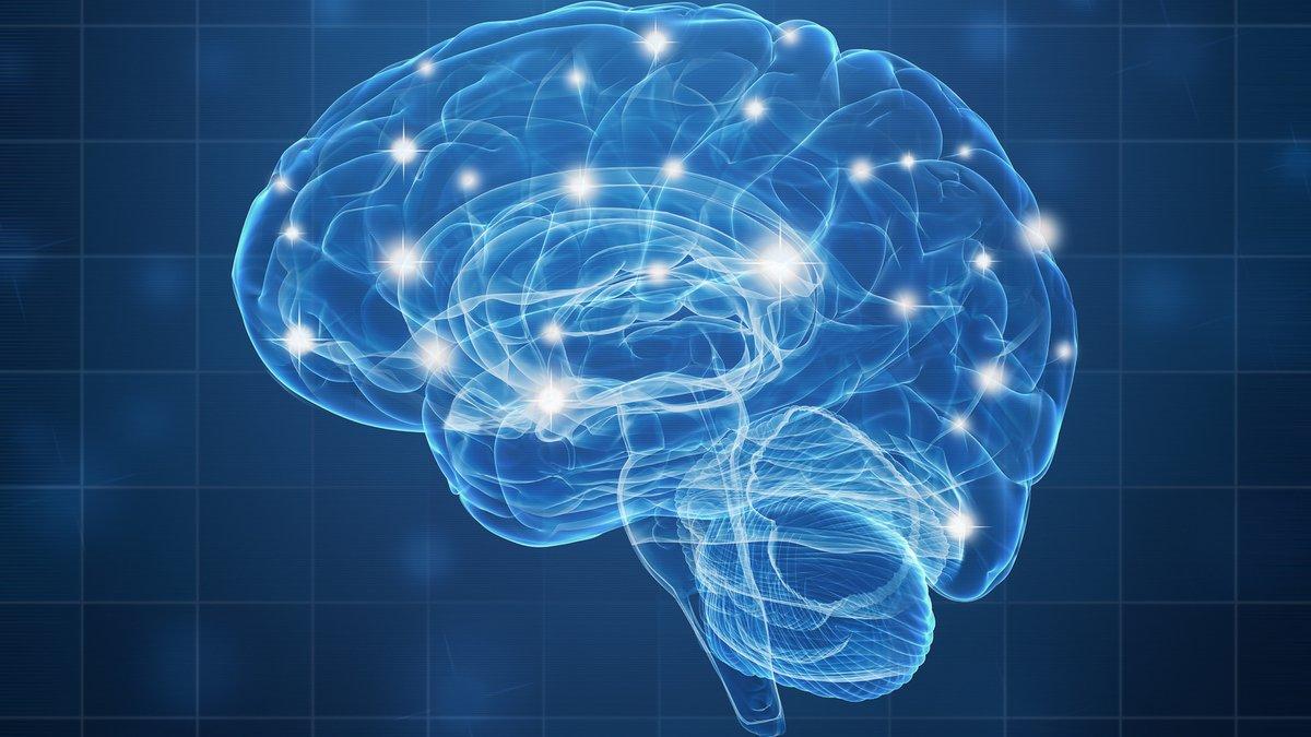 Cerveau neurones © shutterstock.com