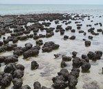 Des signes de vie datant de 3,5 milliards d'années découverts en Australie