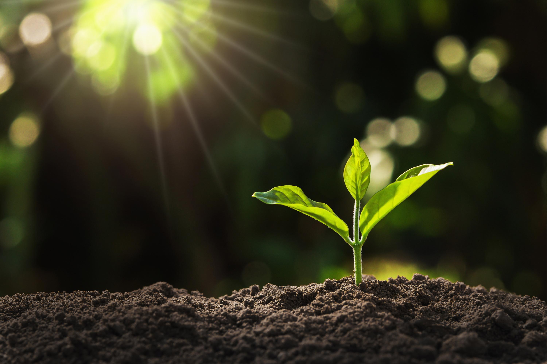 Le CEA a découvert une molécule qui rend les plantes plus résistantes à la sécheresse
